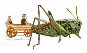 grasshoopper